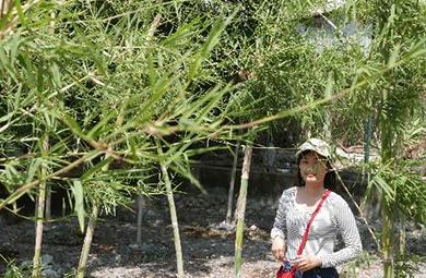 Frau posiert vor Bambus