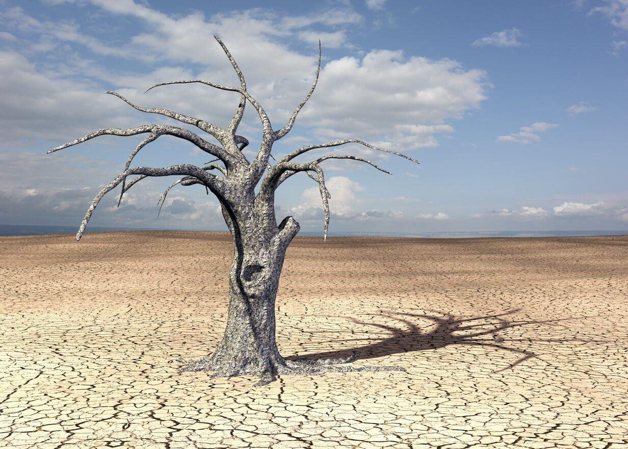 Toter Baum in Wüste