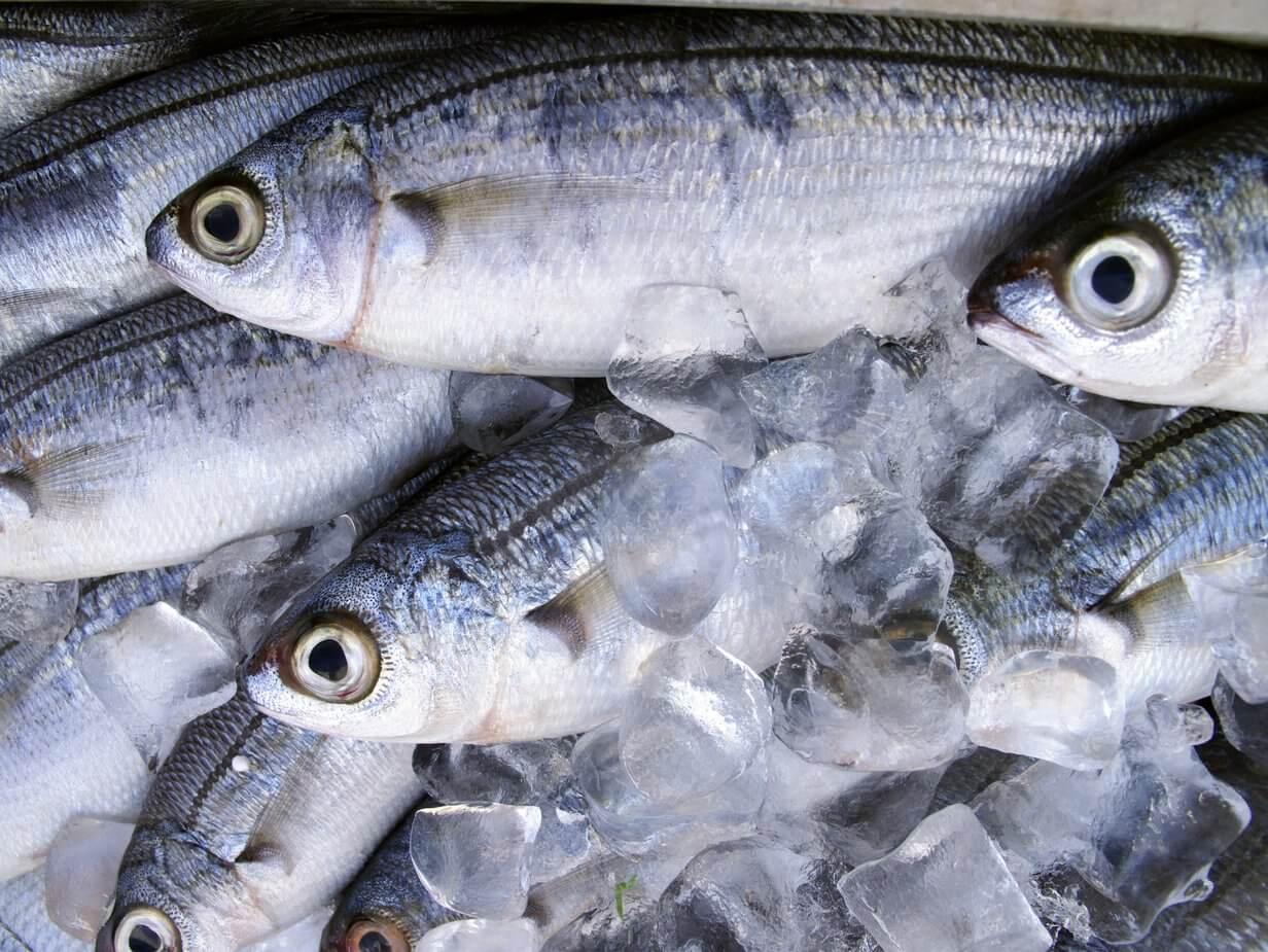 Fischindustrie
